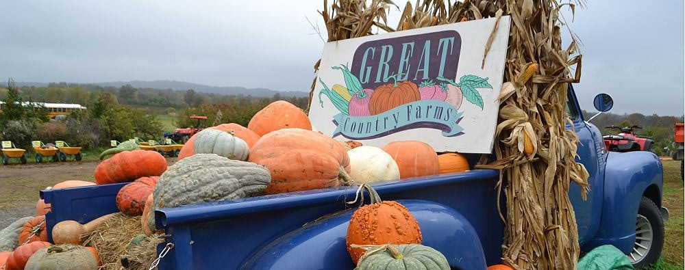 Great Country Farms is a convenient destination for pumpkin picking and wine tasting at Bluemont Vineyard (Photo Courtesy)